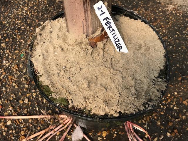 Sabbia sulla superficie