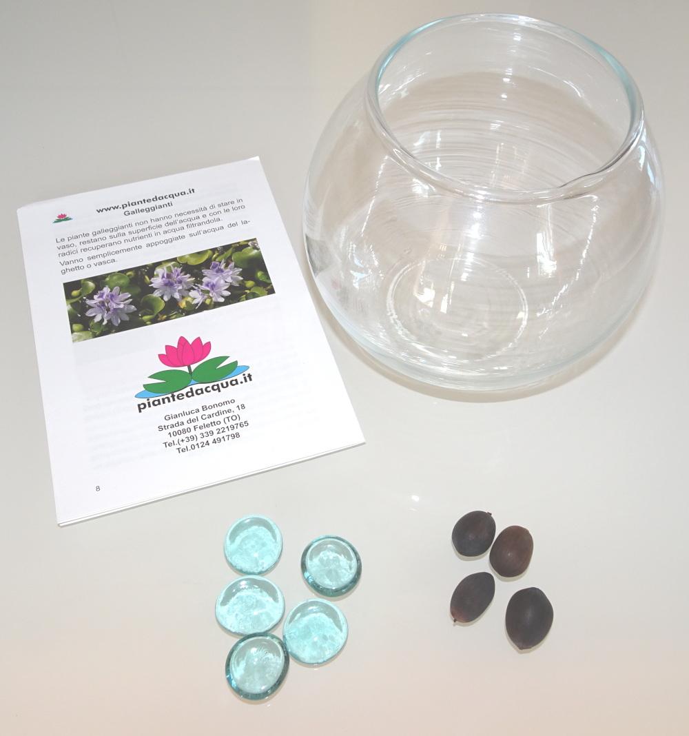 Kit coltivazione semi di loto da seme