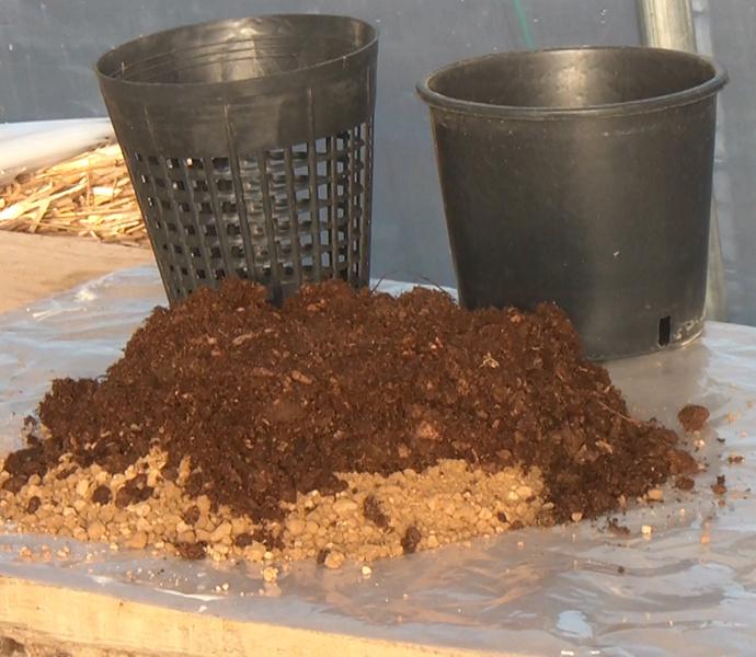 Torba, mista a terreno argilloso, per piante acquatiche