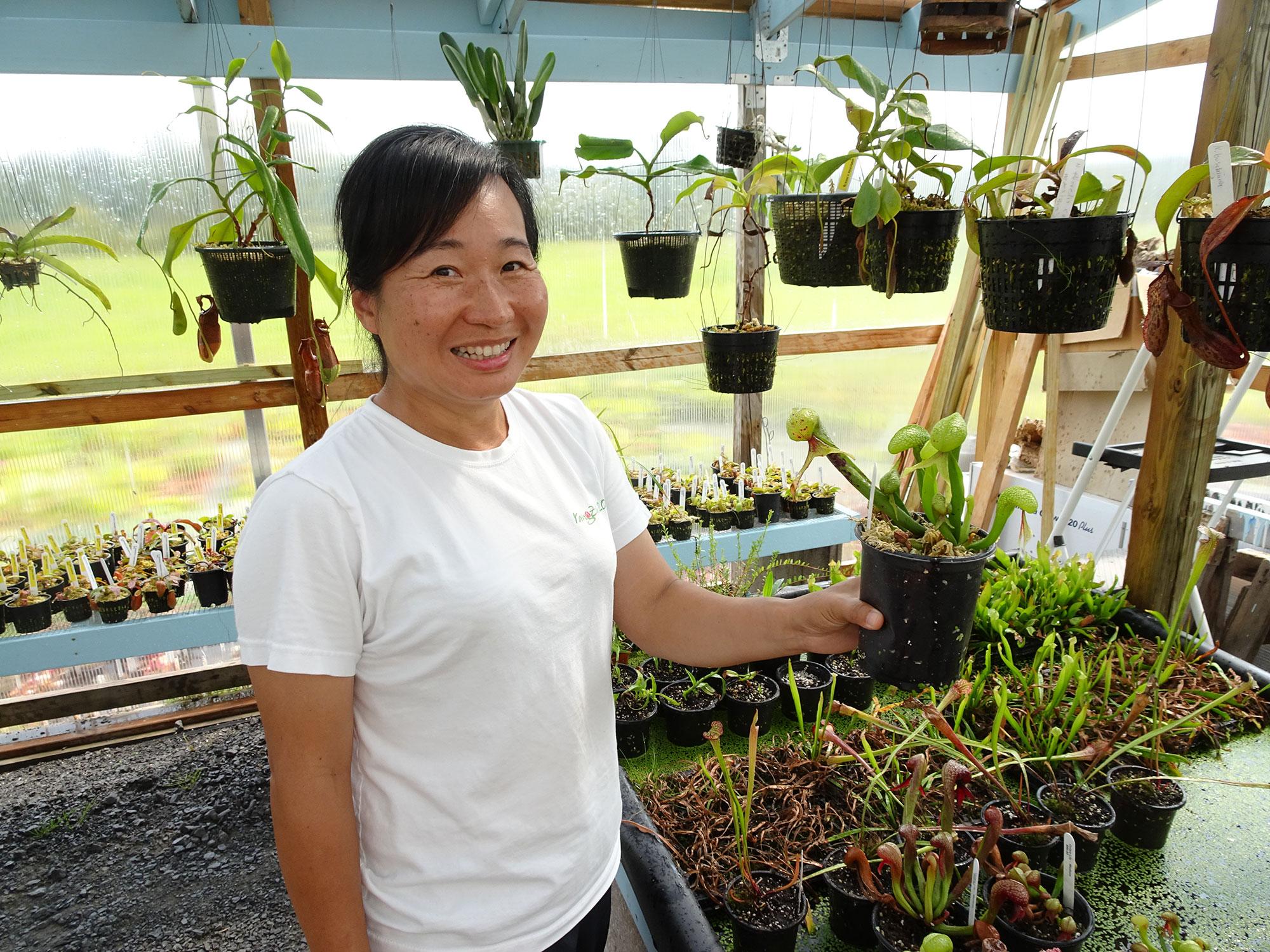Lily e le piante carnivore