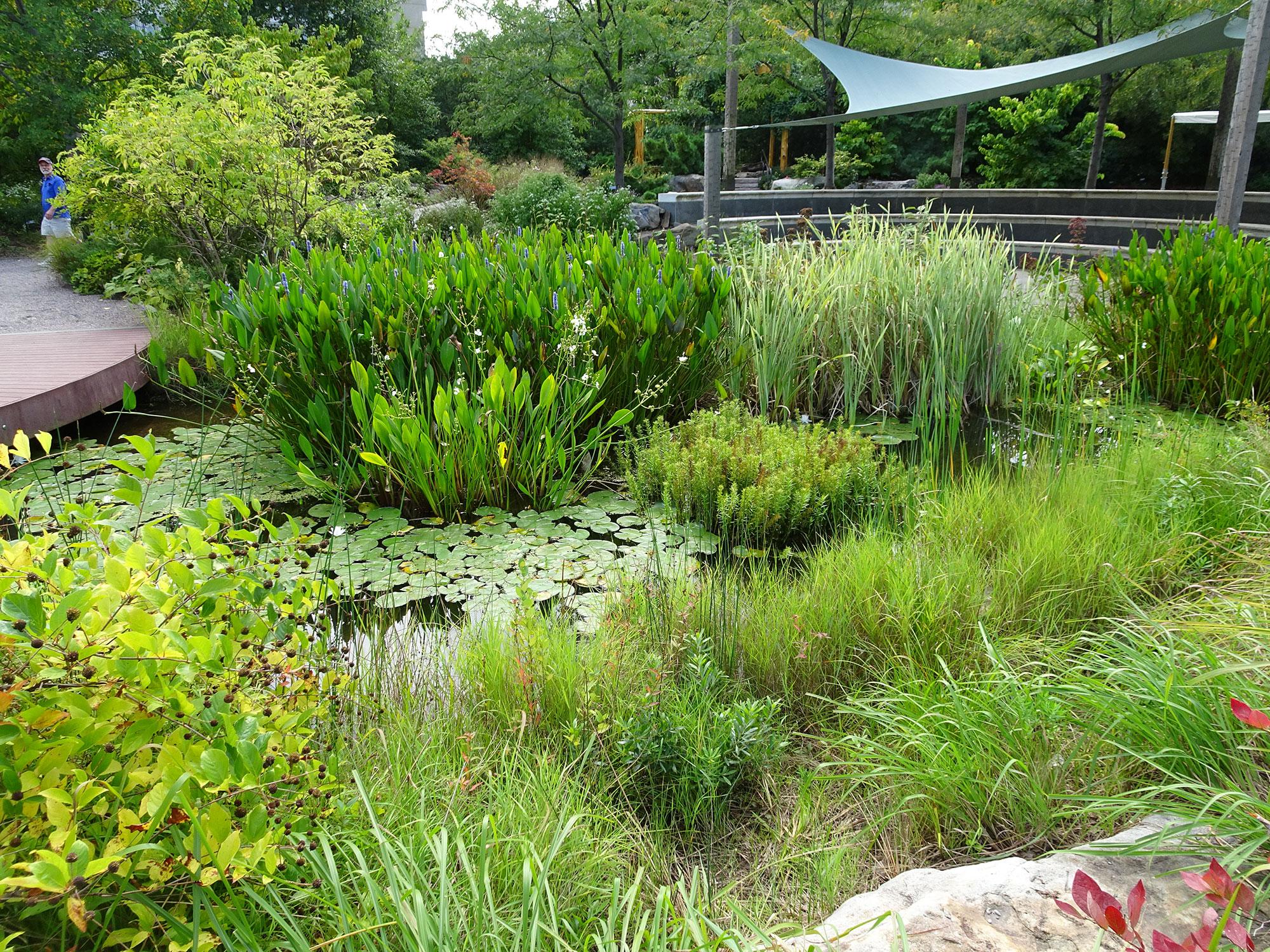 Giardino botanico di Washington
