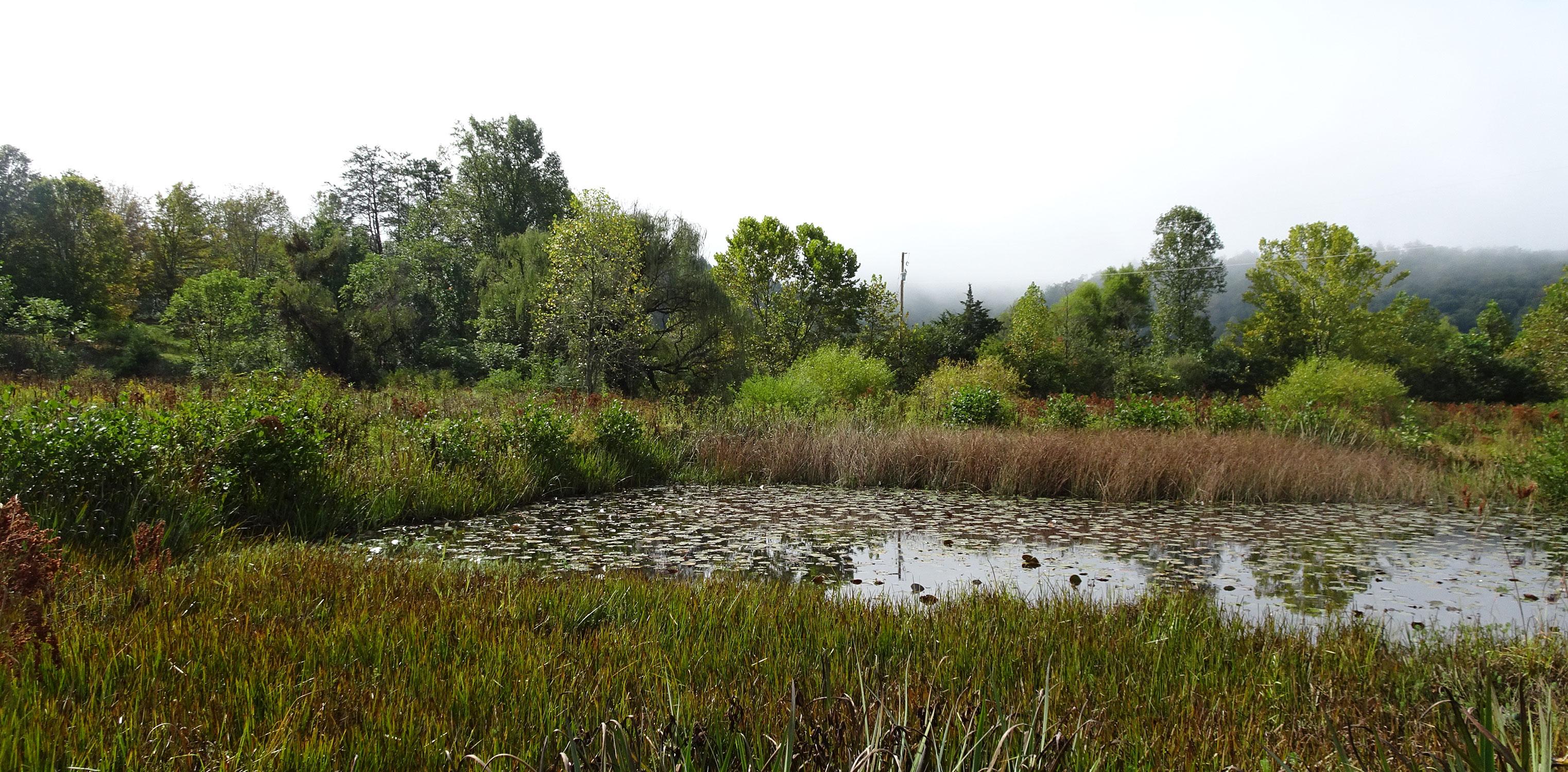 Laghetti al Perry's Water Gardens
