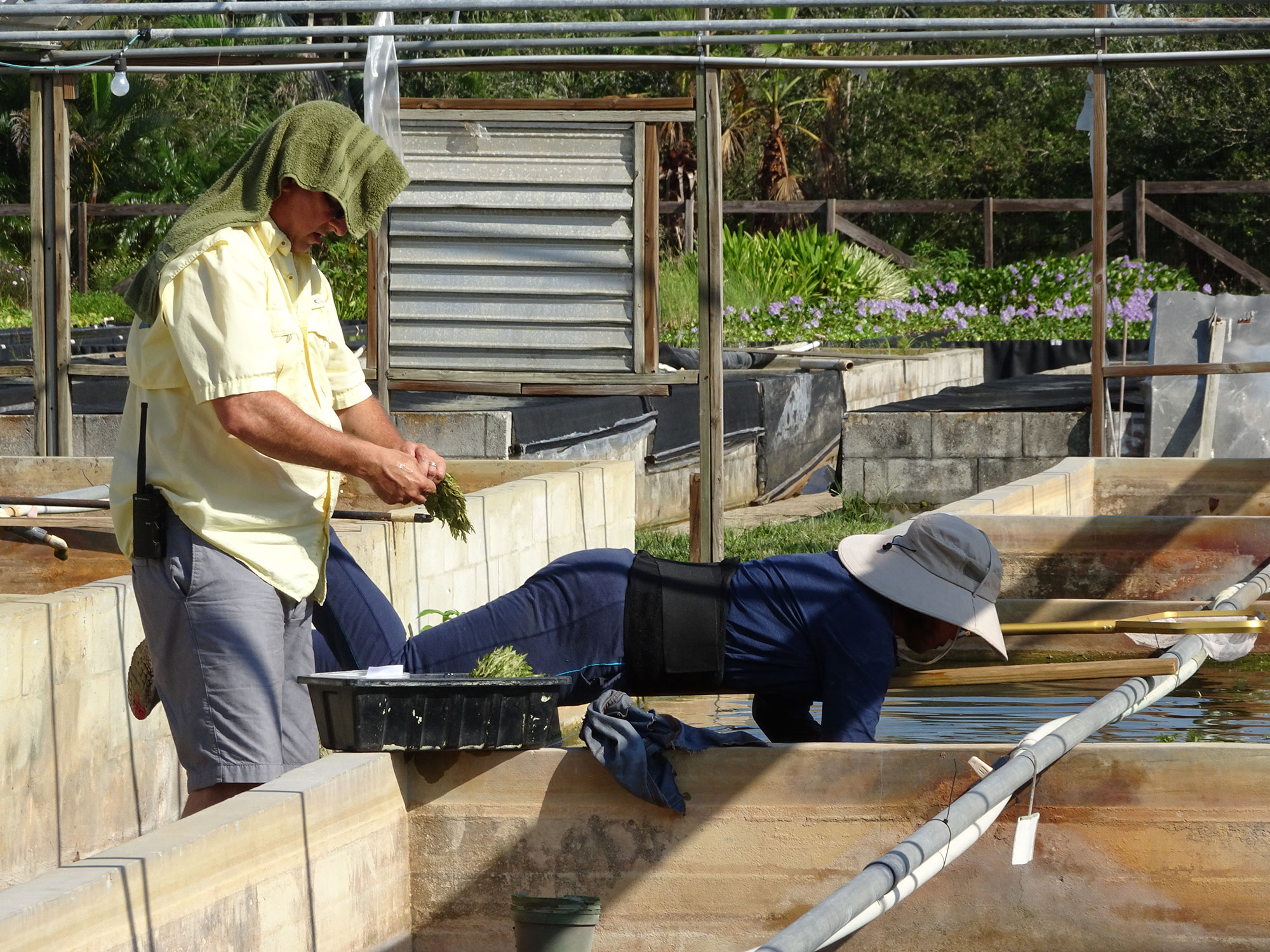 Al lavoro al Florida Aquatic Nursery