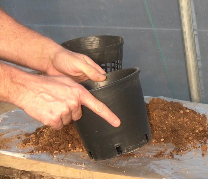 Vaso non forato per piante acquatiche