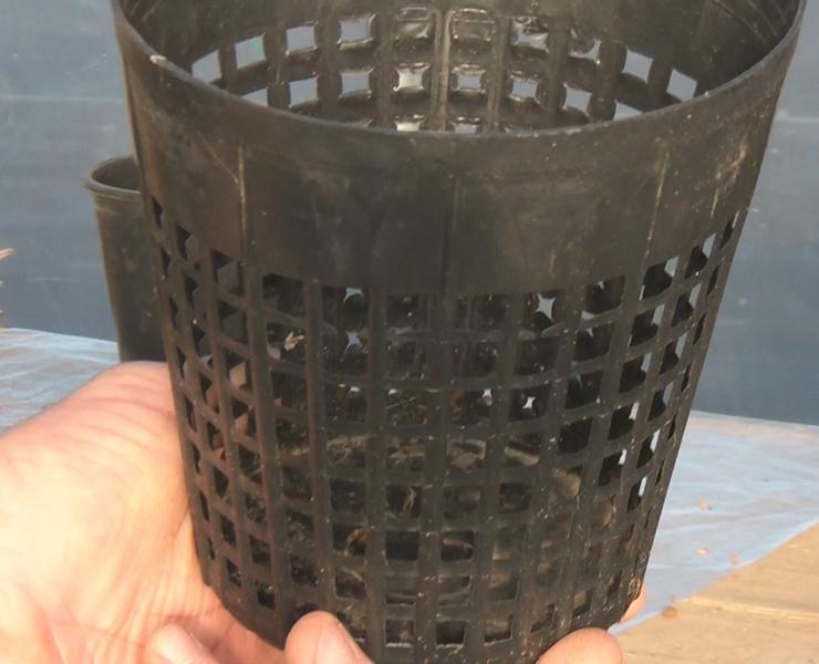 Vaso traforato per piante acquatiche