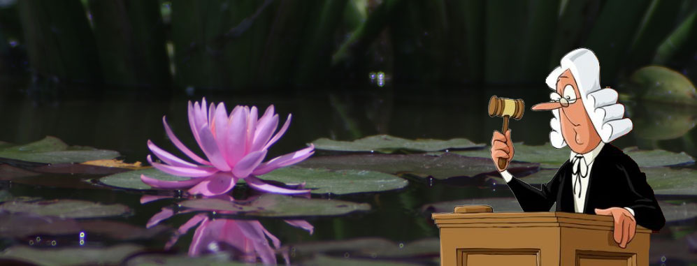 Expert judges waterlilies contest