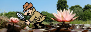 International waterlilies contest judges