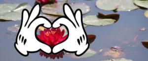 Waterlily lovers judges