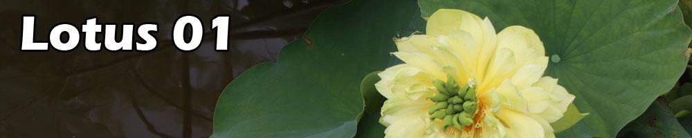 Contest lotus 01
