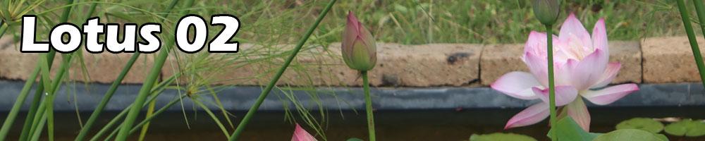 Lotus contest 02