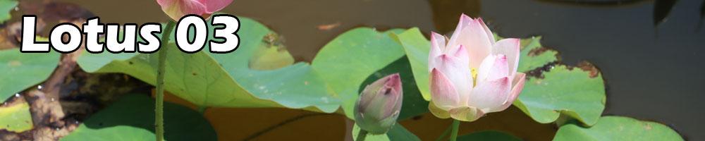 Contest lotus 03